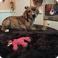 Adopt A Pet :: Flynn - Kittery, ME