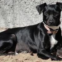 Adopt A Pet :: Lena - Fresno, CA