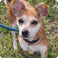 Adopt A Pet :: Foxy - Atlanta, GA