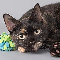 Adopt A Pet :: Cassie - Wilmington, DE