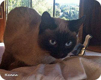 Siamese Kitten for adoption in Mandeville Canyon, California - Hanna