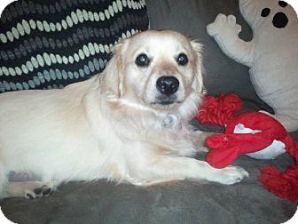 Welsh Corgi Mix Dog for adoption in Lomita, California - Jasper