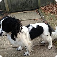 Adopt A Pet :: Bolt - Garwood, NJ