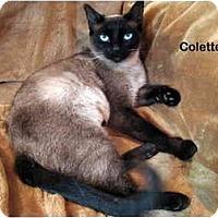 Adopt A Pet :: Colette - Portland, OR