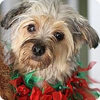 Adopt A Pet :: Mikey - Dayton, OH