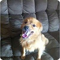 Adopt A Pet :: Davis - Oceanside, CA