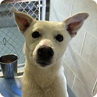 Adopt A Pet :: Nahla - Franklin, KY