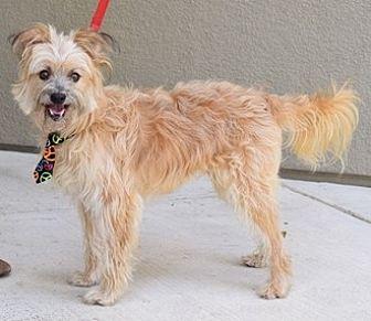 Terrier (Unknown Type, Medium)/Yorkie, Yorkshire Terrier Mix Dog for adoption in Fremont, California - Liam D5122