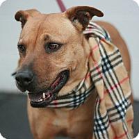 Adopt A Pet :: Wilma - Canoga Park, CA