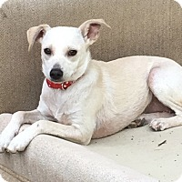 Adopt A Pet :: Norma - Tumwater, WA