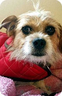 Terrier (Unknown Type, Small) Mix Dog for adoption in Tijeras, New Mexico - Chex