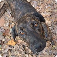 Adopt A Pet :: Mary Kate - Alpharetta, GA