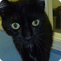 Adopt A Pet :: Lolly - Hamburg, NY