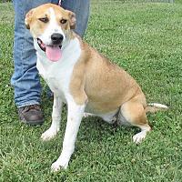 Adopt A Pet :: Kelsie - Reeds Spring, MO