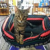 Adopt A Pet :: Newt - Chambersburg, PA