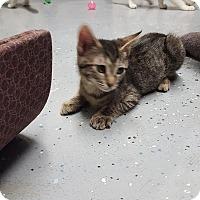 Adopt A Pet :: MILAN&MILEY - Phoenix, AZ