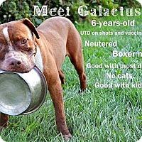 Adopt A Pet :: Galactus - Saginaw, MI
