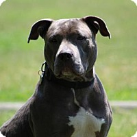 Adopt A Pet :: Sky - Va Beach, VA
