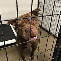 Adopt A Pet :: Buford - Saginaw, MI