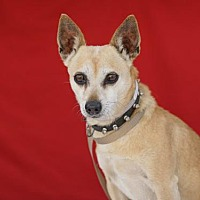 Adopt A Pet :: PHIL - Pasadena, CA