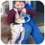 Photo 2 - Beagle Dog for adoption in Portland, Ontario - Peanut