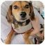 Photo 2 - Beagle Mix Puppy for adoption in Richmond, Virginia - Princess