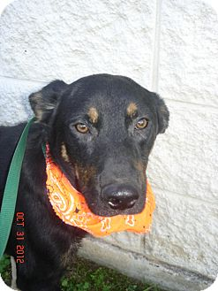 German Shepherd Dog Mix Dog for adoption in Stilwell, Oklahoma - Archie