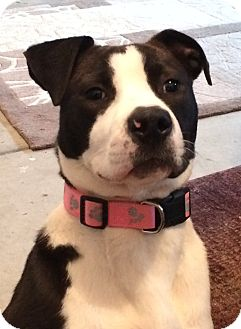 Border Collie Mix Dog for adoption in Bryan, Texas - Sophie