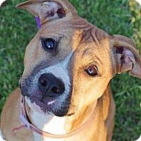 Adopt A Pet :: Princess Leia - Reisterstown, MD