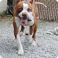 Adopt A Pet :: Tripod - Southampton, PA