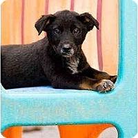 Adopt A Pet :: Nevada - Portland, OR