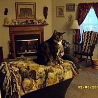 Adopt A Pet :: Toby - Live Oak, FL