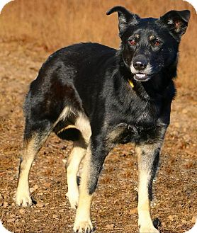 Shepherd (Unknown Type) Mix Dog for adoption in Minneapolis, Minnesota - Nancy
