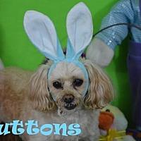 Adopt A Pet :: Buttons - Arcadia, FL