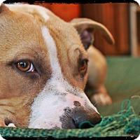 Adopt A Pet :: Camo - Mount Juliet, TN
