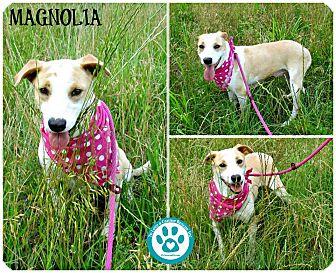 Hound (Unknown Type) Mix Dog for adoption in Kimberton, Pennsylvania - Magnolia