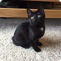 Adopt A Pet :: Felicia - Byron Center, MI