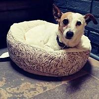 Adopt A Pet :: Roxy/MS - Columbia, TN