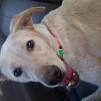 Adopt A Pet :: Leeloo - Phoenix, AZ