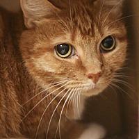 Adopt A Pet :: Meghan (and Marty) - Marlborough, MA
