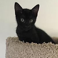 Adopt A Pet :: Ollie - Parlier, CA