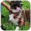 Photo 2 - Great Pyrenees Mix Puppy for adoption in Largo, Florida - Jasmine