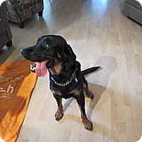 Adopt A Pet :: Romeo - Surrey, BC
