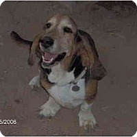 Adopt A Pet :: Kadie - Phoenix, AZ