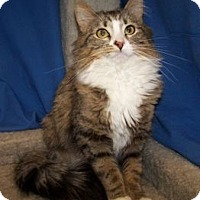 Adopt A Pet :: Hope - Colorado Springs, CO