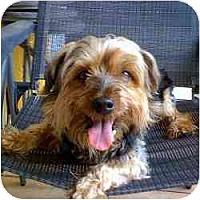 Adopt A Pet :: Gus - Homestead, FL