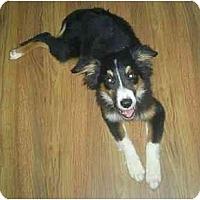 Adopt A Pet :: Rita - Orlando, FL