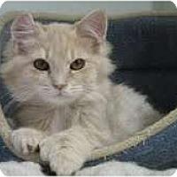Adopt A Pet :: Fresca - Arlington, VA