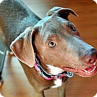 Adopt A Pet :: Venice - Houston, TX