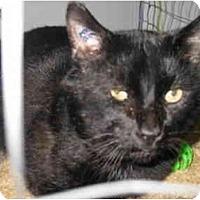 Adopt A Pet :: Prescott - Mission, BC